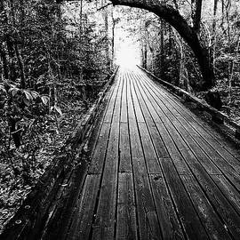 Scott Pellegrin - The Path - BW