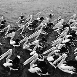 fbmovercrafts - The Pelican Dance