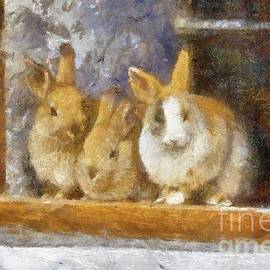 The Rabbit Window by Sarah Kirk - Sarah Kirk