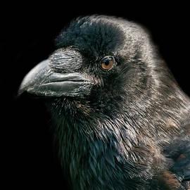 The Raven  by Darren Wilkes