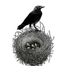 The Raven's Nest by Sandra McGinley