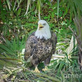 Judy Kay - The Sea Eagle