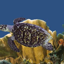 The Sea Turtle by Paula Porterfield-Izzo