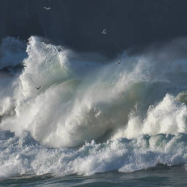 The seagulls and the wave