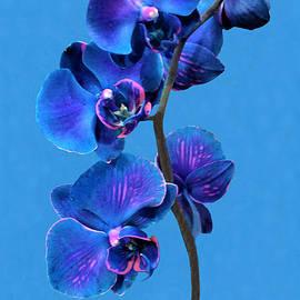 Olga Zavgorodnya - The Secret of Blue Orchid