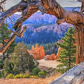 The Secret Place Bryce Canyon Utah by Charlene Cox
