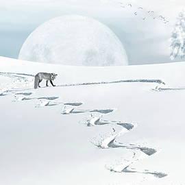 Andrea Kollo - The Silver Fox