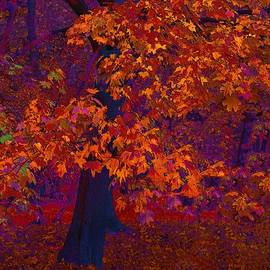 Witold Jastrzebski - The smell of sunny Autumn