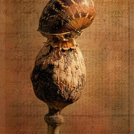 Liz Alderdice - The Snail
