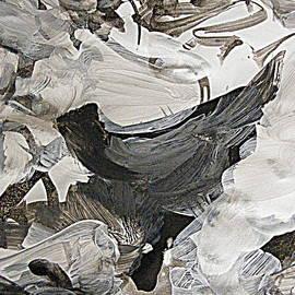The Spirit of the Bird by Nancy Kane Chapman