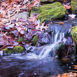 The Stream In Fall by Robert McKay Jones