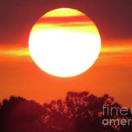 Zina Stromberg - The sun