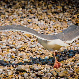 The Takeoff by Loriental Photography