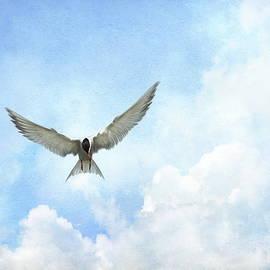Andrea Kollo - The Tern - Elegance in Flight