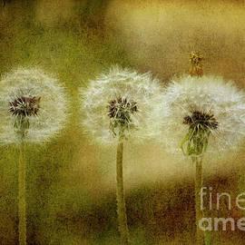 The Three by Rebecca Langen