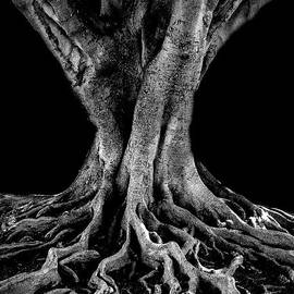 The Tree  by Mitch Shindelbower