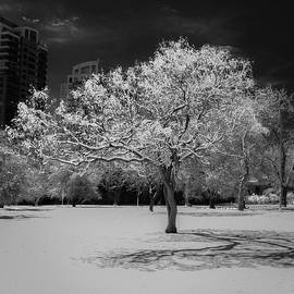 Bridget Calip - The Tree Stands Alone