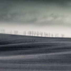 The Trees On The Horizon  #monochrome