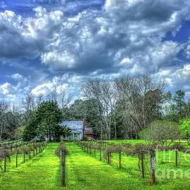Reid Callaway - The Vineyard Vines Landscape Photography Art