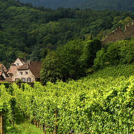 Paul MAURICE - The vineyards of Kaysersberg - Alsace - France