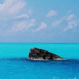 The Vixen Rising In Bermuda by Poet's Eye