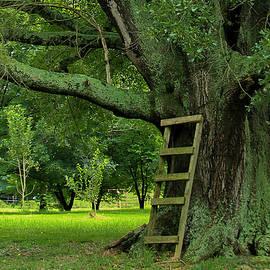 Reid Callaway - This Way Up 2 Oak Tree Art