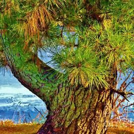 JudithAnne Monahan - The Whimsical Tree