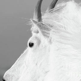 The White King by Jim Garrison