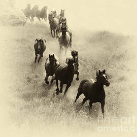 The Wild Bunch 1 by Bob Christopher
