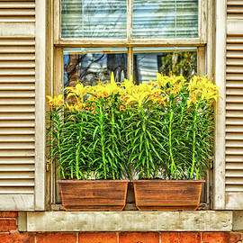 The Window Box by Gestalt Imagery