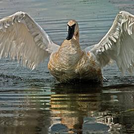 Jayne Gohr - The Wings Of An Angel