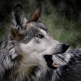 Ernie Echols - The Wolf 4a