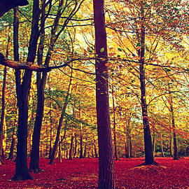 The Woods in Fall by Loretta S