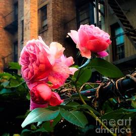 Miriam Danar - There is a Rose in Spanish Harlem