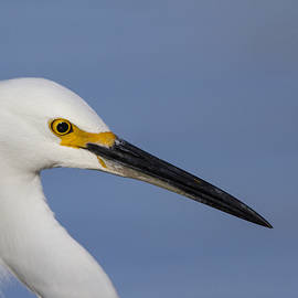 There is an Egret by Ruth Jolly