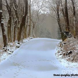 Tami Quigley - These Winter Days ...