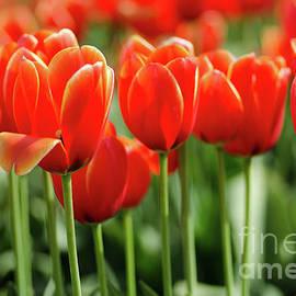 Nick Boren - Thinking Of Spring