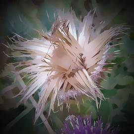 Thistle Abstract by Pamela Walton