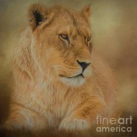 Teresa Wilson - Thoughtful Lioness - Square