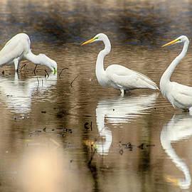 Three Amigos by John Radosevich