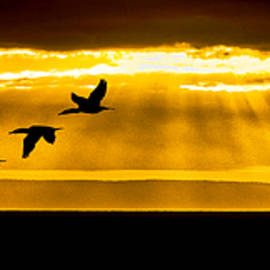 Marty Saccone - Three Cormorant Sunrise Panorama