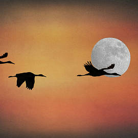 Three cranes by Jerry Griffin