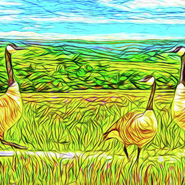 Joel Bruce Wallach - Three Geese - Farm In Boulder County Colorado