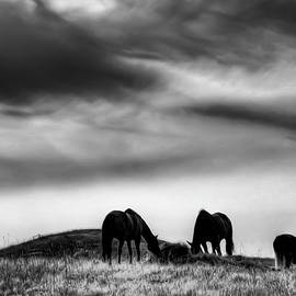 Three Horses on the Hill by David Patterson
