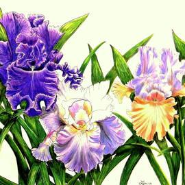 Laura Wilson - Three Irises 1