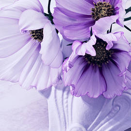 Three Lavender Cosmos by Sandra Foster