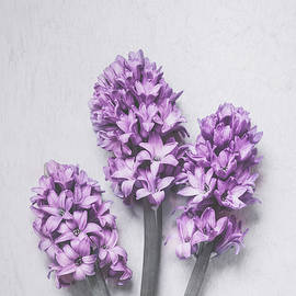 Maria Heyens - Three Light Purple Hyacinths