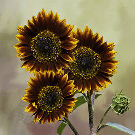 Diane Schuster - Three Painted Sunflowers Plus Two Buds