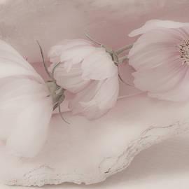 Sandra Foster - Three Pink Cosmo Flowers