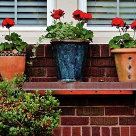 Three Potted Flowers by Cynthia Guinn